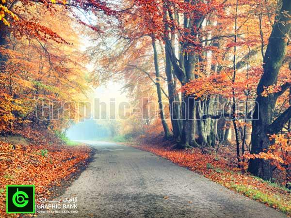 تصویر جاده جنگل پاییزی