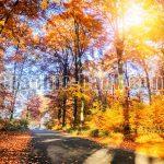 تصویر جنگل پاییزی (1)