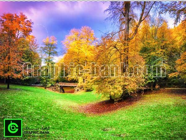 تصویر جنگل پاییزی (2)