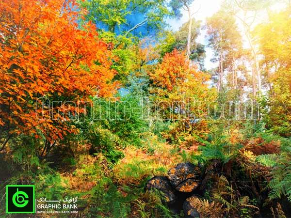تصویر جنگل پاییزی (3)