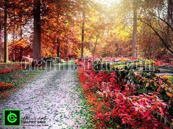 تصویر جنگل پاییزی