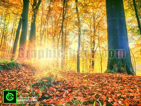 تصویر خورشید در جنگل پاییزی