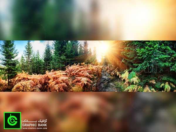 تصویر خورشید در جنگل