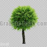 تصویر png درخت 2
