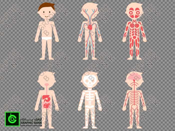 وکتور سیستم های بدن