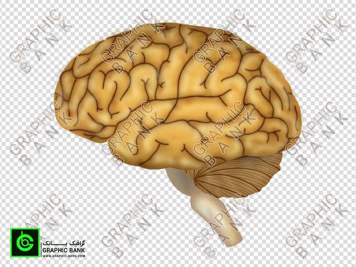 وکتور مغز