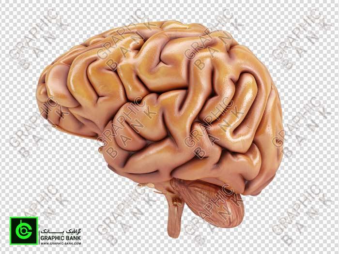 تصویر png مغز