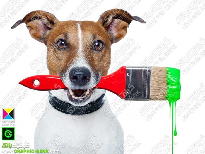تصویر براش رنگ در هان سگ
