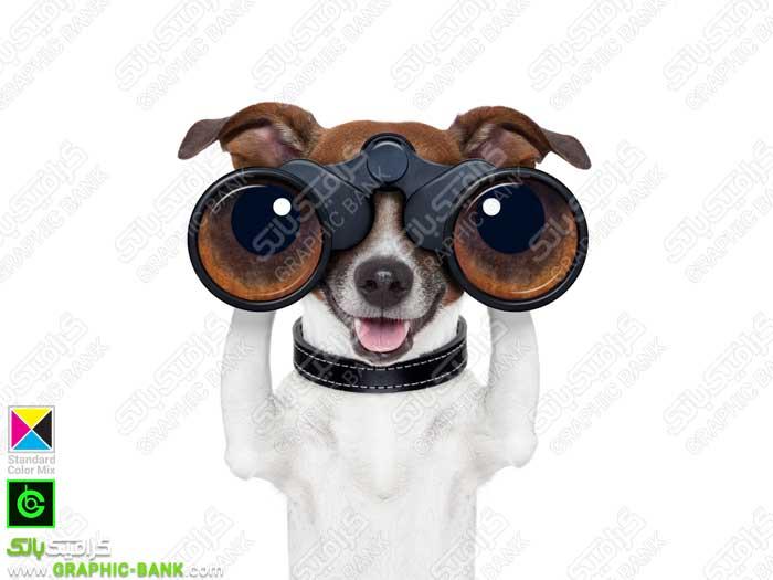 تصویر سگ با دوربین