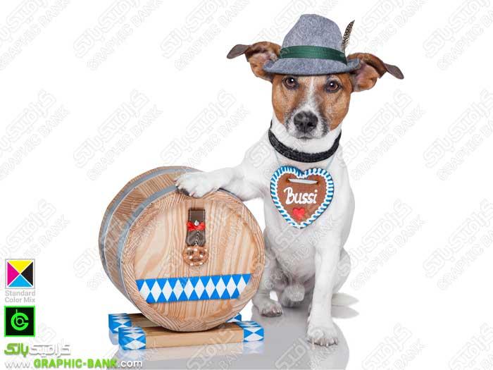 تصویر سگ با طبل