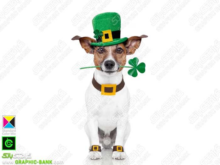 تصویر سگ با کلاه