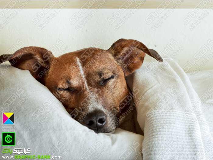 تصویر سگ خواب