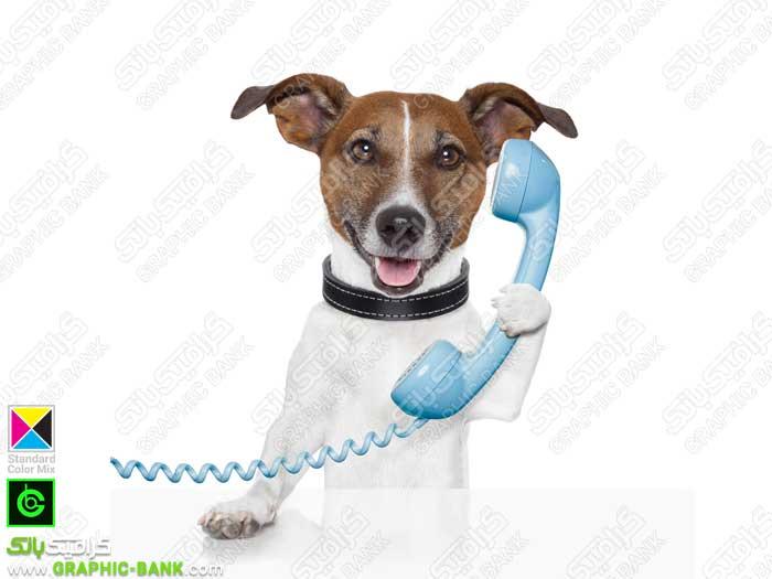 تصویر سگ در حالت صحبت با تلفن