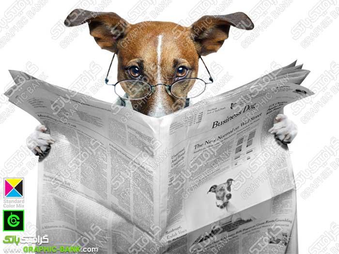 تصویر سگ در حال خواندن روزنامه