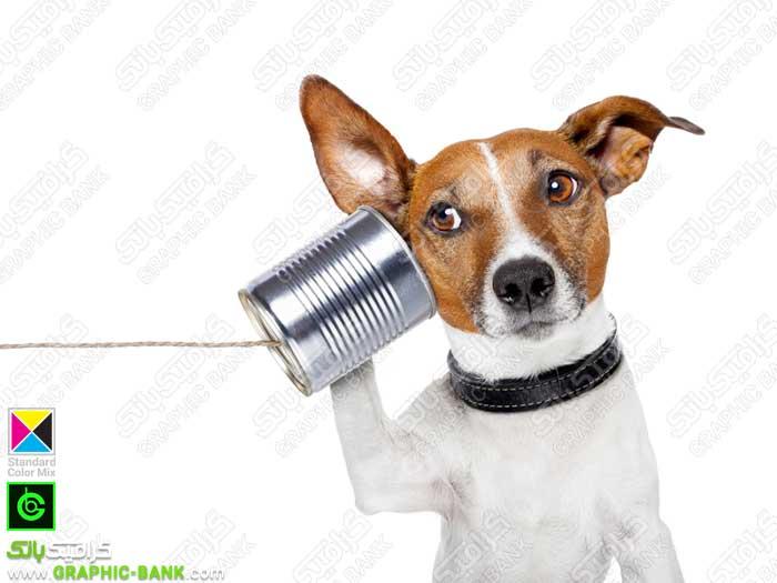 تصویر سگ در حال گوش دادن