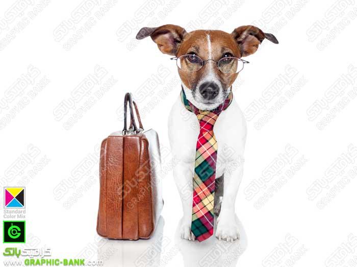 تصویر سگ دیپلمات