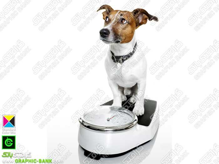 تصویر سگ روی ترازو