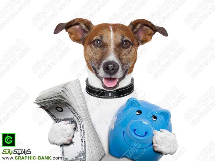تصویر سگ پول به دست