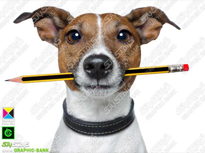 تصویر مداد در دهان سگ