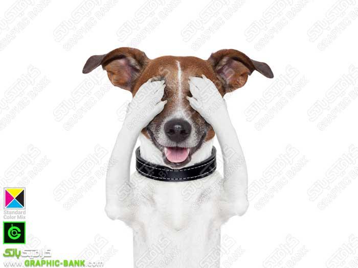 سگ با چشمان بسته