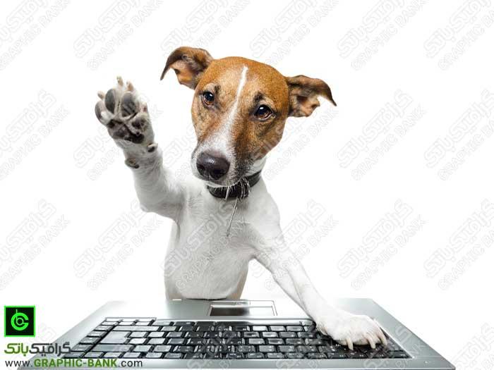 سگ در حال استفاده از کامپیوتر