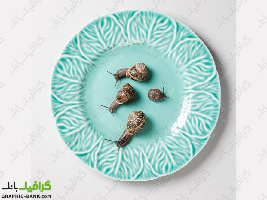تصویر حلزون ها در ظرف غذا